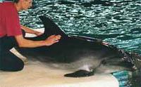 dulphin2