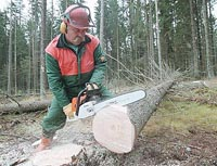 Timber industry in Russia