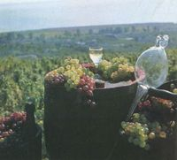 The Hungarian Wine Center will be inaugurated in St. Petersburg in 2003