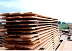 Sawmill to be constructed in Leningrad Region