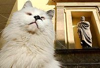 cats_museummouser