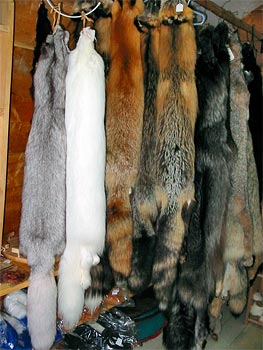 Fur Auction Opens in Russia's St. Petersburg