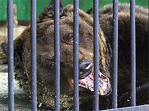 Bear Awakes