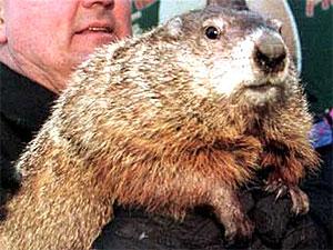 Marmot's Day