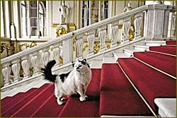 65 cats protect artworks at Russia museum